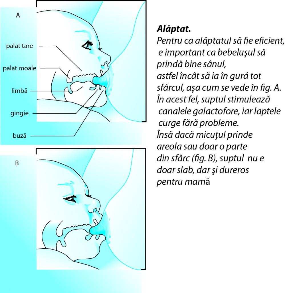 atasarea bebelusului la san